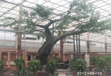 假树,雕塑,旅游区,风景区,个人庭院,门面及室内室外的景观塑造艺术