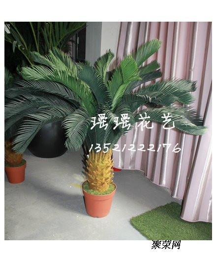 椰子树,榕树等大型园林景观植物