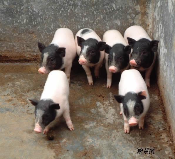 特种养殖动物 特种禽畜