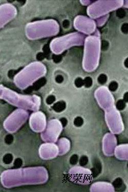 产气荚膜芽孢梭菌手绘图片