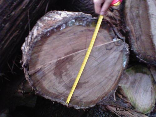 野生厓柏乌木原木图片